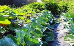 piante-orto